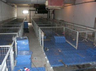 Замена подова за свиње / Zamena podova za svinje